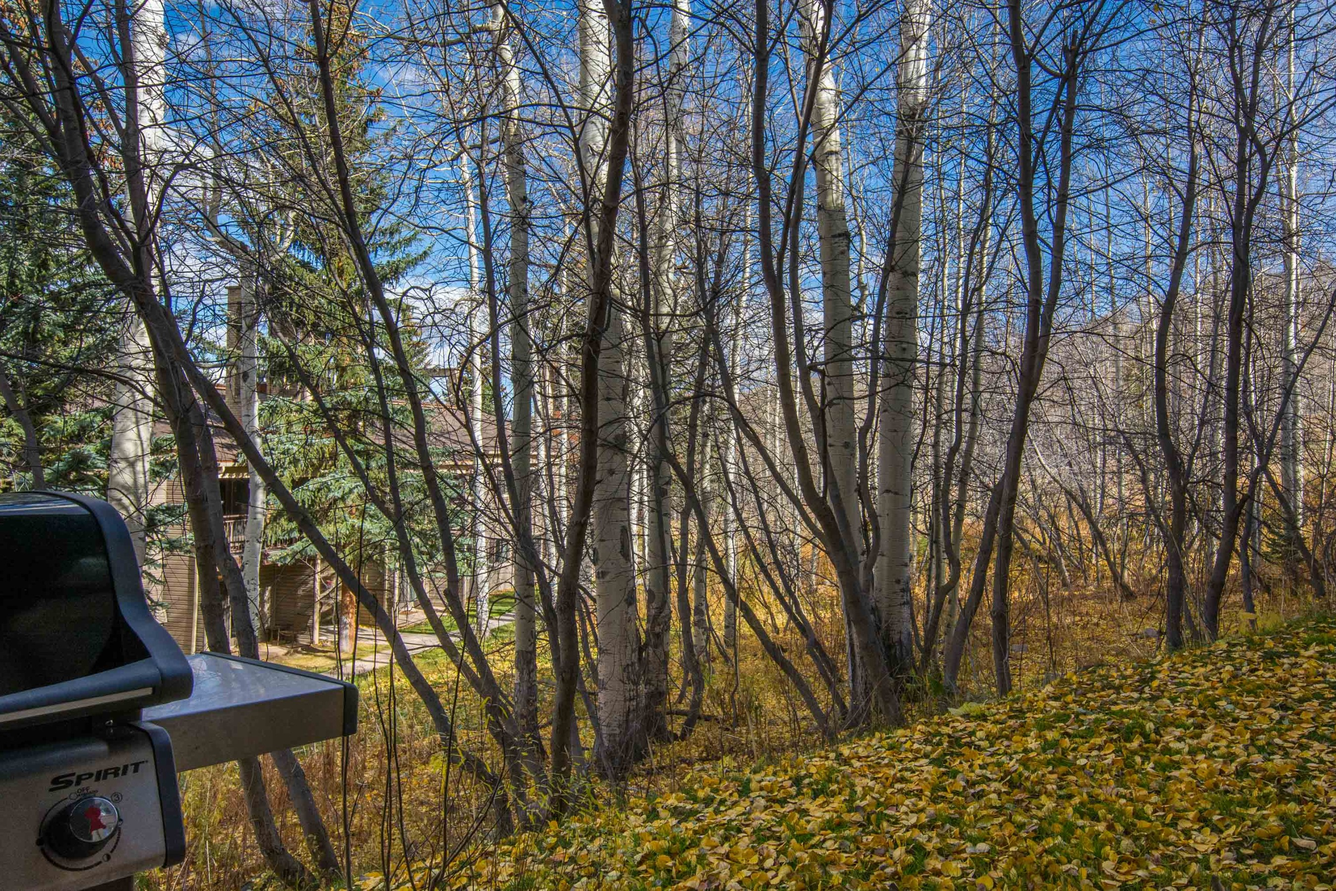 855 Carriage Way, Leaf 101  Snowmass Village Photo 12